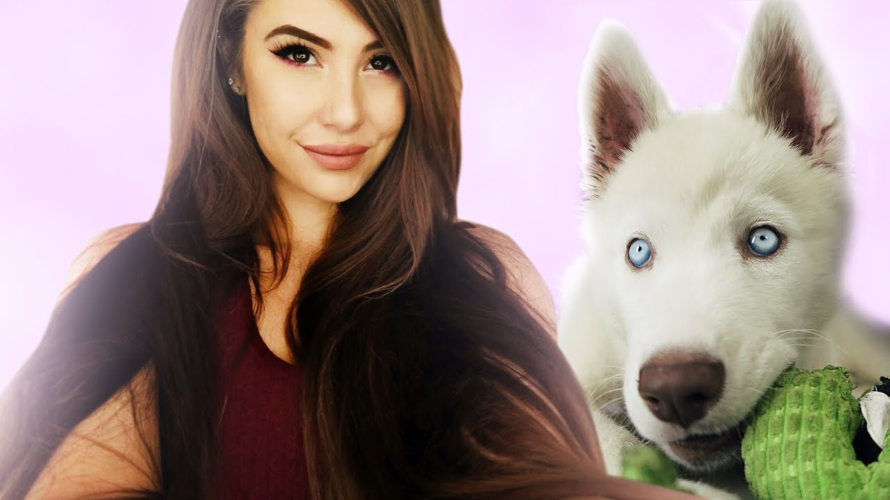 Getting A New Dog Ask Leah 2 Youtube