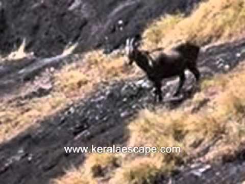 Kerala Wildlife Sanctuaries-Wildlife Tourism Kerala