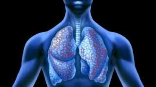 Effect of Asbestos on the Lungs