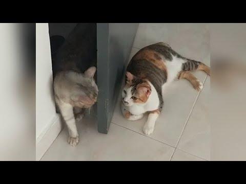 [Guard cat l Cute and funny cat video ] 삥 뜯는 고양이 보보 l 고양이 웃긴 영상ㅣVertical video(세로영상)