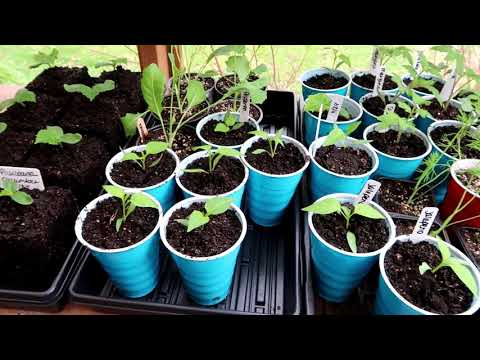 HOW MY GARDEN GROWS - FORMER GLEANER PAYS IT FORWARD