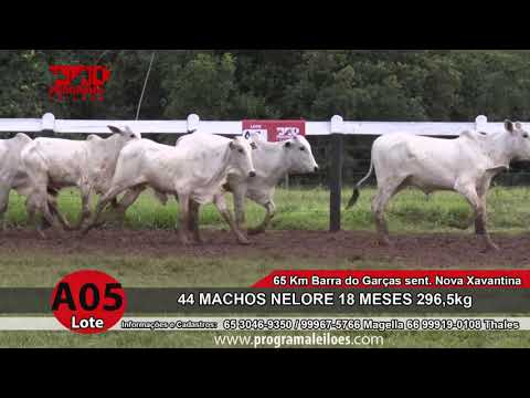 LOTE A05