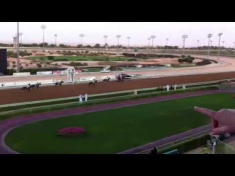 Riyadh horses