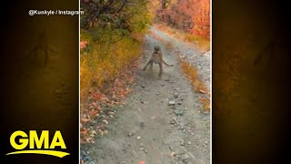 Hiker speaks out after wild cougar video