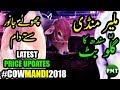 Malir Cow Mandi 2018 Latest Price Updates Demand 50K - 70K Episode 8 Qurbani Cows for Bakra Eid 2018