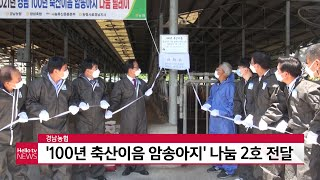 경남농협 '100년 축산이음 암송아지' 나눔 2호 전달