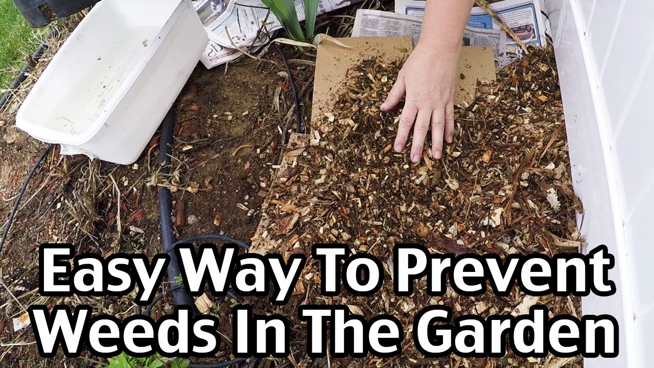 An Easy Way To Mulch And Prevent Weeds In The Garden