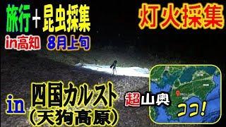 カブトムシ+クワガタ=昆虫採集 四国カルストの天狗高原で灯火採集やっ...