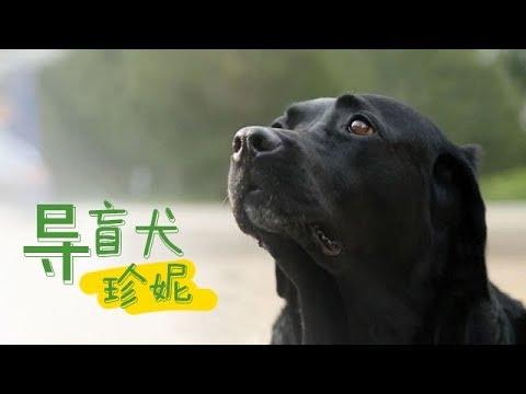 《导盲犬珍妮》 中国第一位盲人钢琴调律师和中国第十八条导盲犬的故事 | CCTV纪录