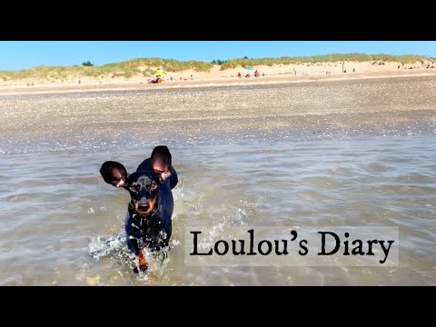 Loulous Diary 15| The life of a dachshund.