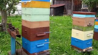 Моё двухкорпусное пчеловодство 2017 года(видео отчёт)