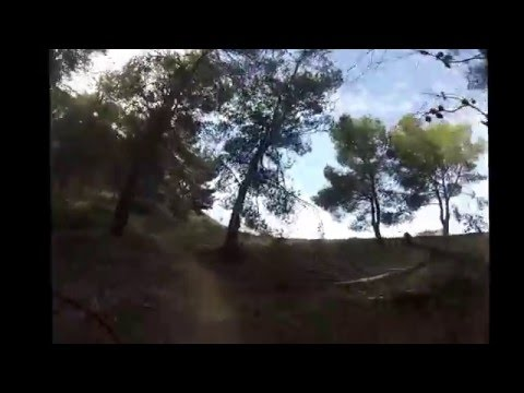 Malaga, Limonar