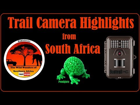 FEATURED VIDEO: Trailcam Highlights From South Africa - LIAAN LATEGAN
