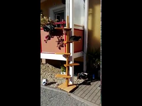 Miaudo Die Katzentreppe Fur Den Balkon Hauswand Co Youtube