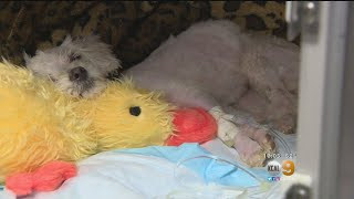 Reward Increased For Suspect Who Brutally Beat Dog In Long Beach