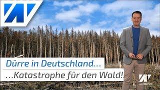 Waldsterben 2.0: Dürre-Katastrophe in Deutschland!