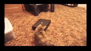 Кошки смешные ролики