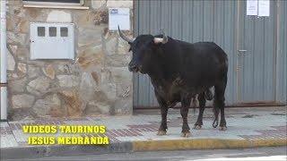 Encierro Yunquera de Henares 18-09-18