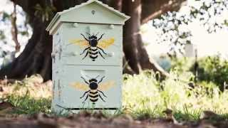 Check out this custom-painted Hoop Pine Flow Hive