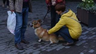 Кино для собак в Сокольниках