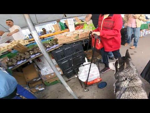 Amazing Good Behavior Siberian Husky Visit the Most Crowded Farmers Market in Boston