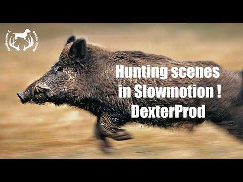 HUNTING SCENES IN SLOW MOTION ! - DexterProd@