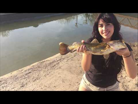 Catching a Flathead and a Mysterious Object in the Arizona Canal 4K