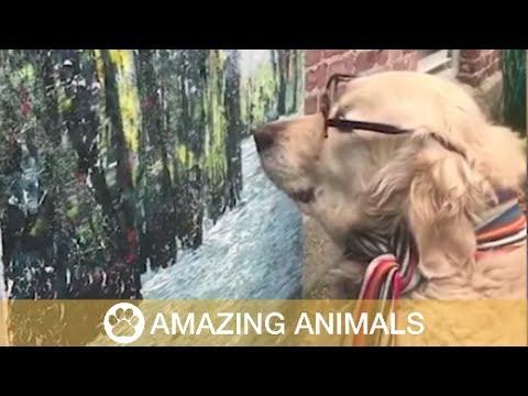 Discerning Dog Art Critic