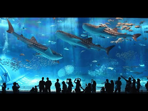 Private Transport and Tours in Japan (Okinawa Tokyo Osaka Hokkaido) - Easy Travel