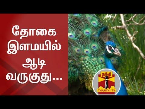 தோகை இளமயில் ஆடி வருகுது... புதுக்கோட்டை ஆட்சியர் அலுவலகத்தில்! | Thanthi TV