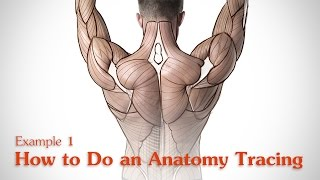 How to Do an Anatomy Tracing