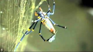 Spider In My Stew - Magic Slim
