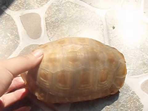 Rùa núi vàng phơi nắng ^^