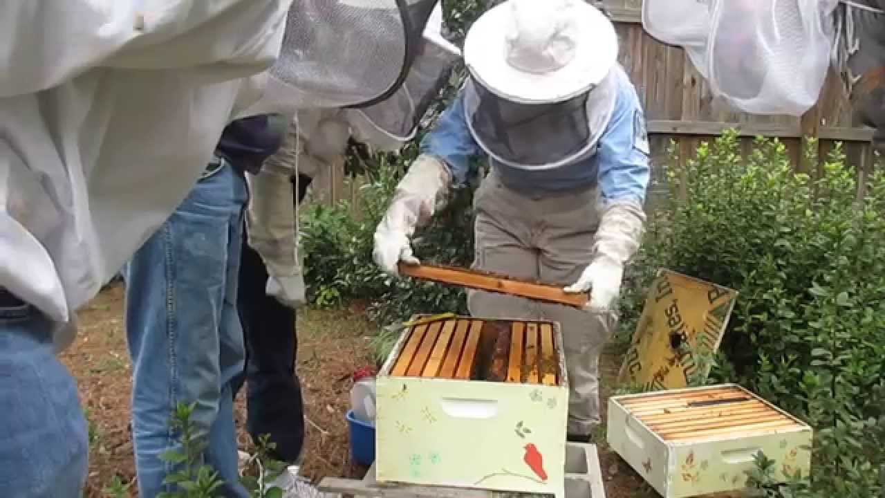 Watch How to Inspect a Beehive video
