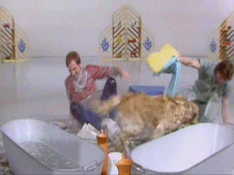Blue Peter Pets Compilation