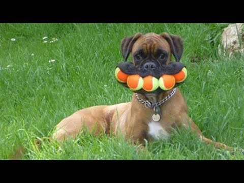*Try Not To Laugh Challenge* - Funny Dogs Compilation [MUST SEE]