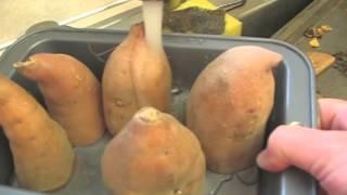 How to Grow Your Own Sweet Potato Slips Thumbnail