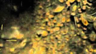 Amazonian bat cave