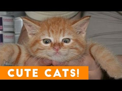 Ultimate CUTE CATS Compilation | Cute Pets 2017