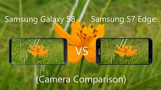 Samsung Galaxy S8 Vs Samsung Galaxy S7 Edge Camera Comparison