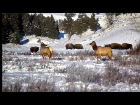 Yellowstone National Park Winter 2016