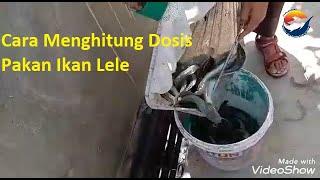 Cara Menghitung Dosis Pakan Ikan Lele