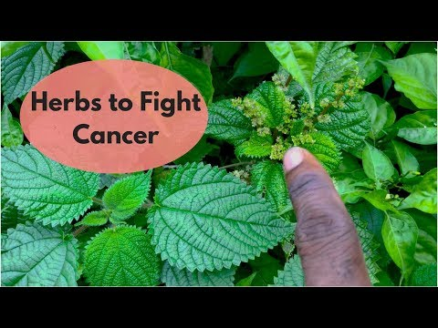 Herbal remedy to fight Cancer Feat. Hon. Priest Kailash l Green Juice l Retreat Lecture Series Pt. 2