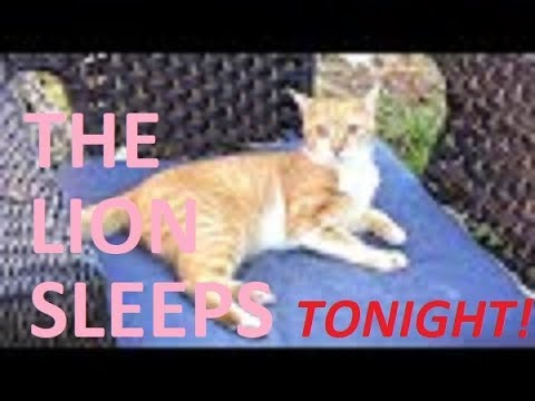 The MOST moving rendition of THE LION SLEEPS TONIGHT ever!!! ~ Has to be seen to be believed!