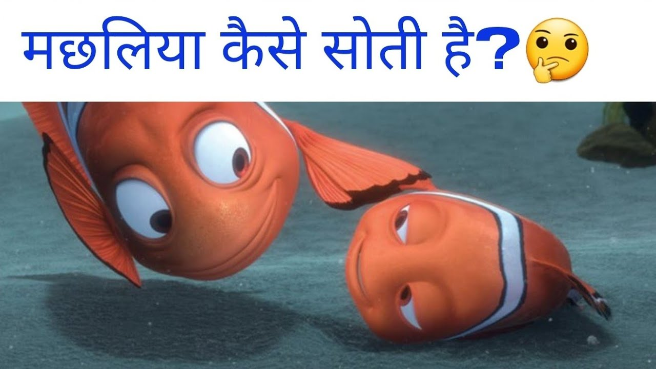 😮क्या मछलियां कभी सोती भी है?🤔😯 - Do Fishes Sleep? and Various Random Facts -TEF Ep 132