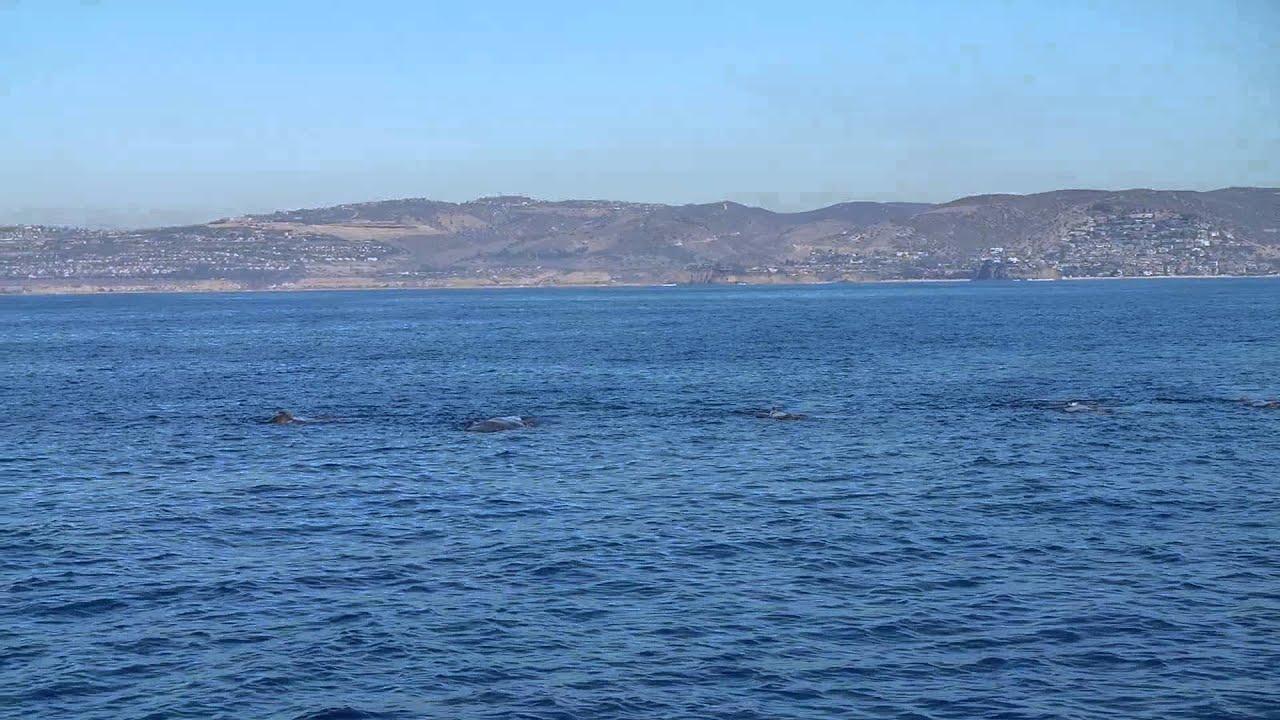 whale point Sperm