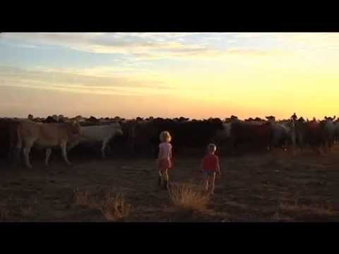 Drought: Western Qld graziers not so welcoming to drovers this season