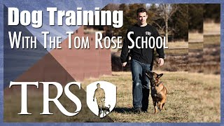 Professional Dog Training With The Tom Rose School