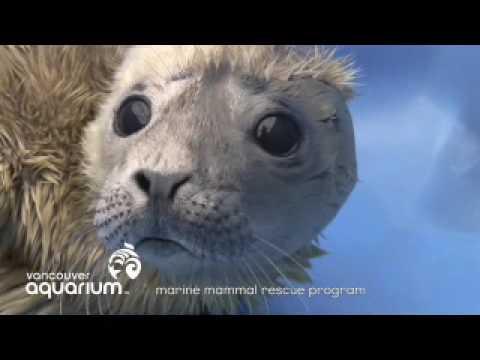 When A Marine Mammal Arrives