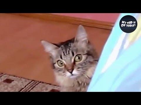 If You LAUGH You Have To ADOPT a PET 😸 YLYL ★63 (Animal Edition)